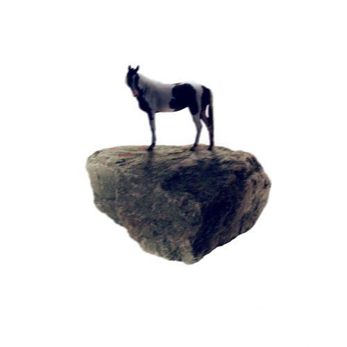 00_cavallo-min-scaled