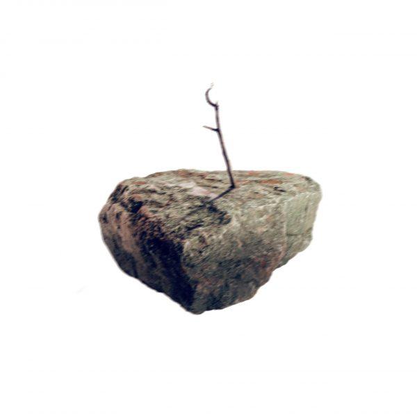 01_albero-min-scaled
